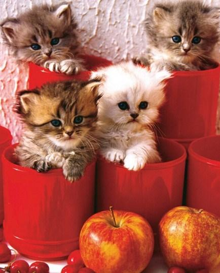 Kittens & Apples Paint by Diamonds