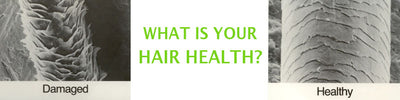 What Is The Health of Your Hair?