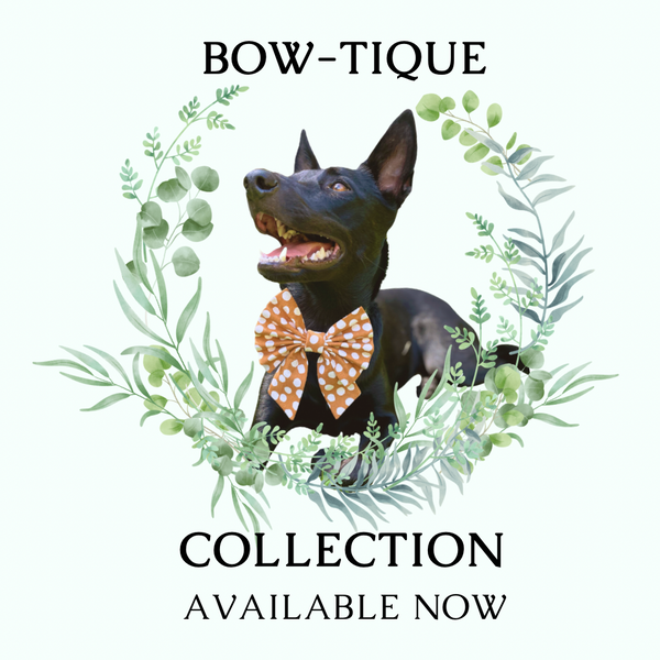 Black Pepper Dogwear All New Bow-tique Collection Available now - Bow Ties & Sailor Bows