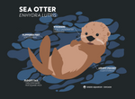 Load image into Gallery viewer, Sea Otter Science Adult T-Shirt