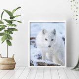 White Fox Diamond Painting - 3