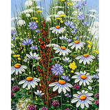 Diamond Painting Camomile field