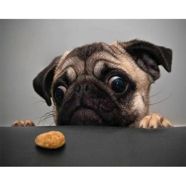 Dog with biscuits