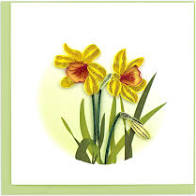 Daffodil - Quilling Card