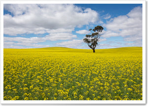 Load image into Gallery viewer, CANOLA FIELDS - SA042