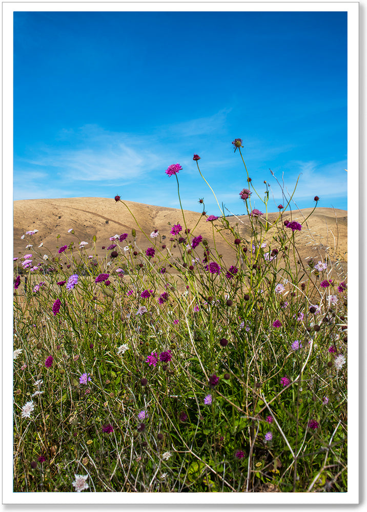 Load image into Gallery viewer, SUMMER WILD FLOWERS - SA060