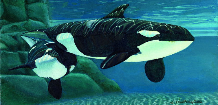 Pair of Killer Whales by Susie Mathias