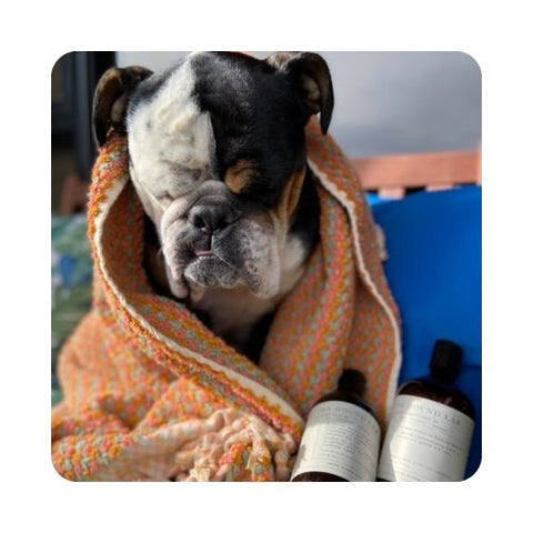 after bathing your dog, take time to dry your dog's coat