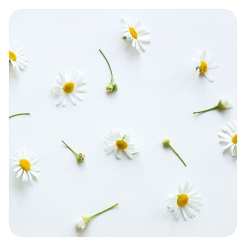 oils like chamomile are a safe essential oil for the skin
