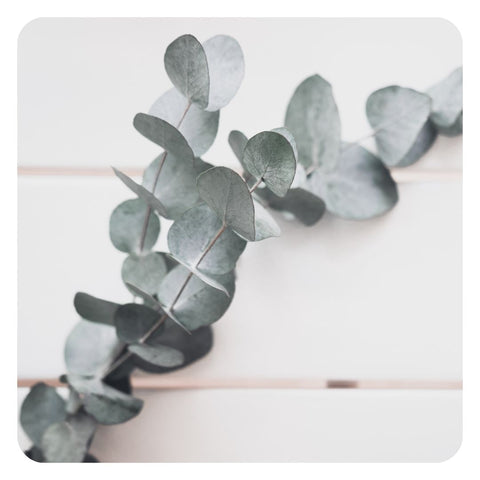 use of essential oils such as eucalyptus may cause essential oil poisoning