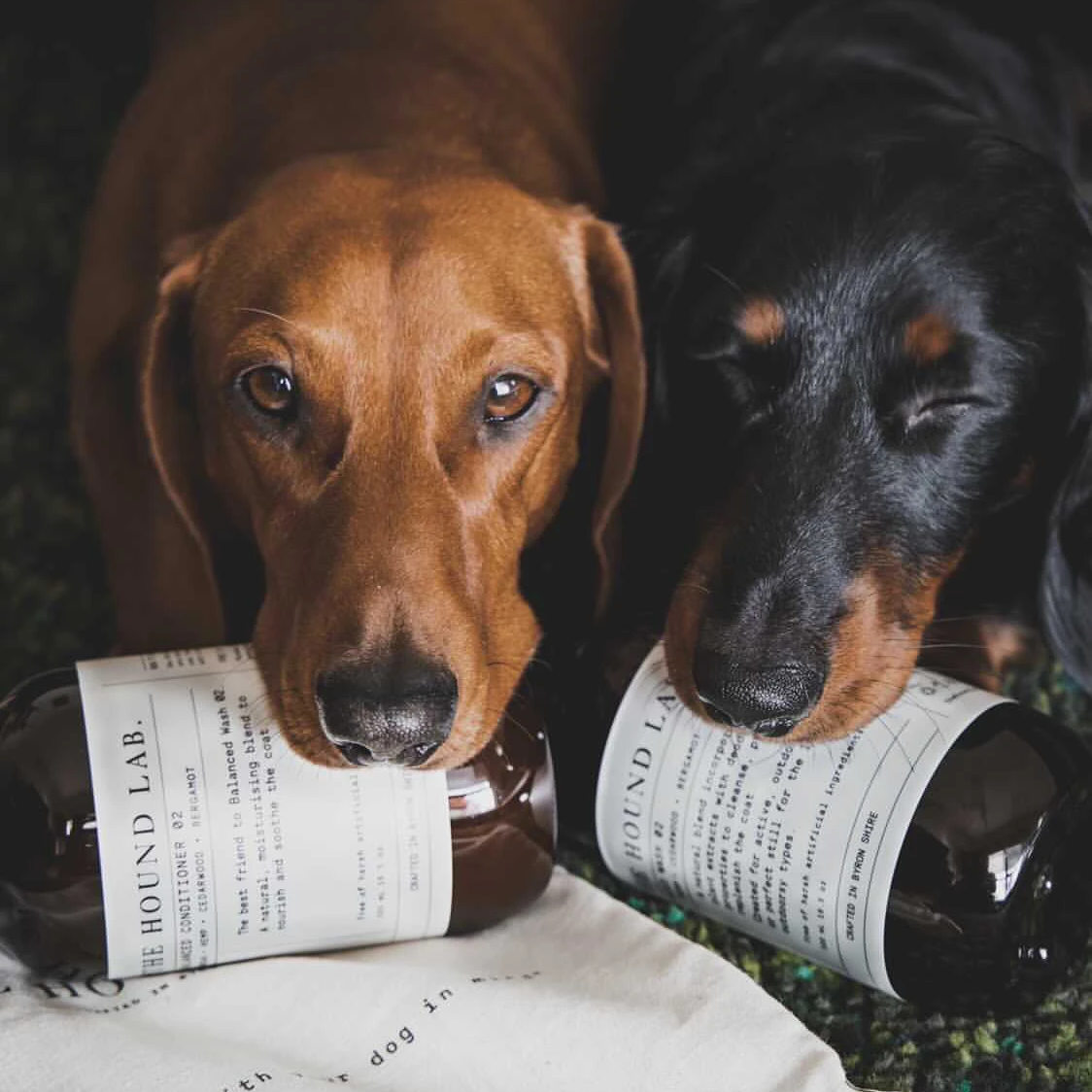 A customer review about The Hound Lab