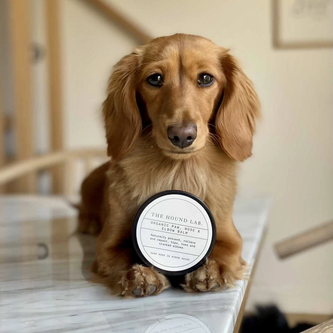 Paw, nose and elbow balm with a dog