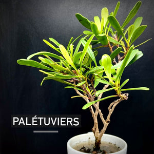 PALETUVIERS