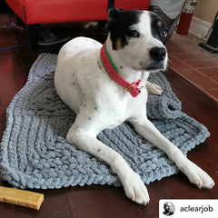 White and black dog on a knitted grey chenille dog rug.