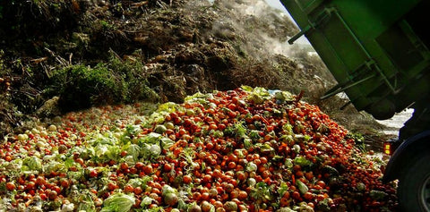 Fruits and Vegetables in Landfill