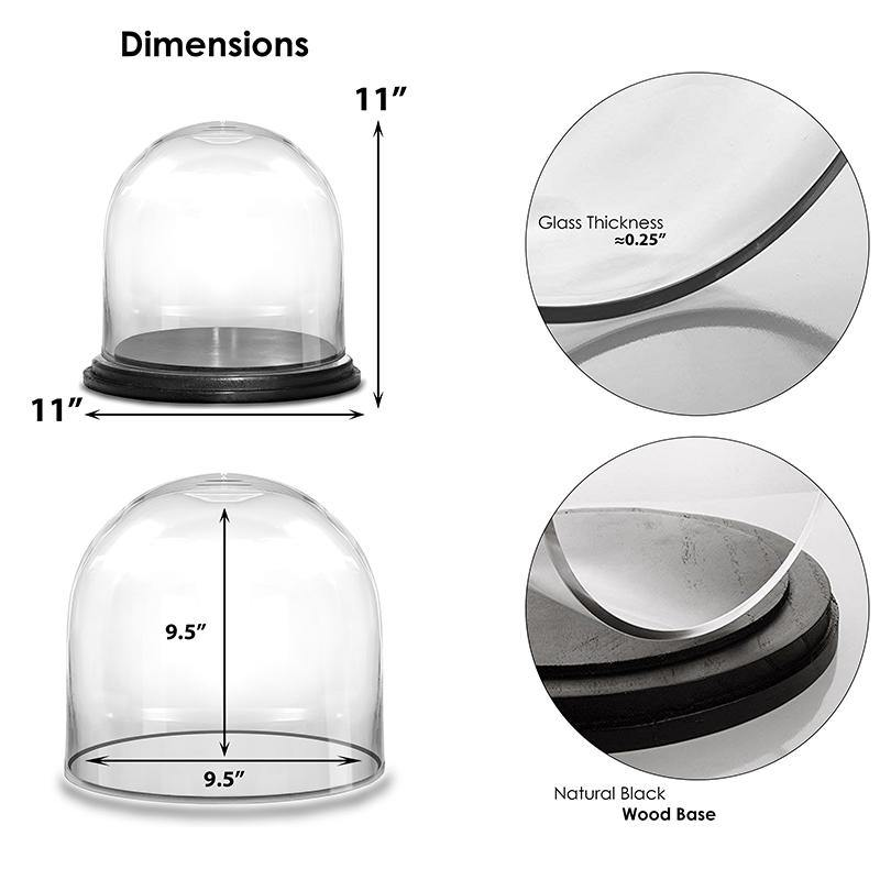 "Clear Glass Cloche Dome with Black Wood Base D-11"" H-11"" - Pack of 1 PC"