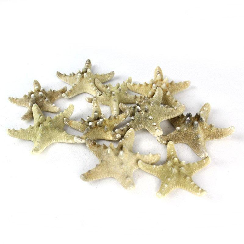 "Natural Vase Filler Large Star Fish Knobby D-3""-4"" - Pack of 48 PCS"