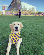 Load image into Gallery viewer, Go Vikes! Bandana