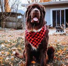 Load image into Gallery viewer, Buffalo Check Flannel Bandana