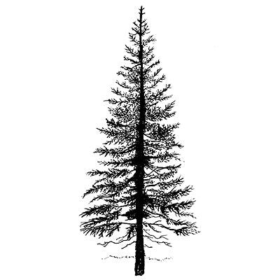 LAV094 Fir Tree 1 1 .98x2.56""