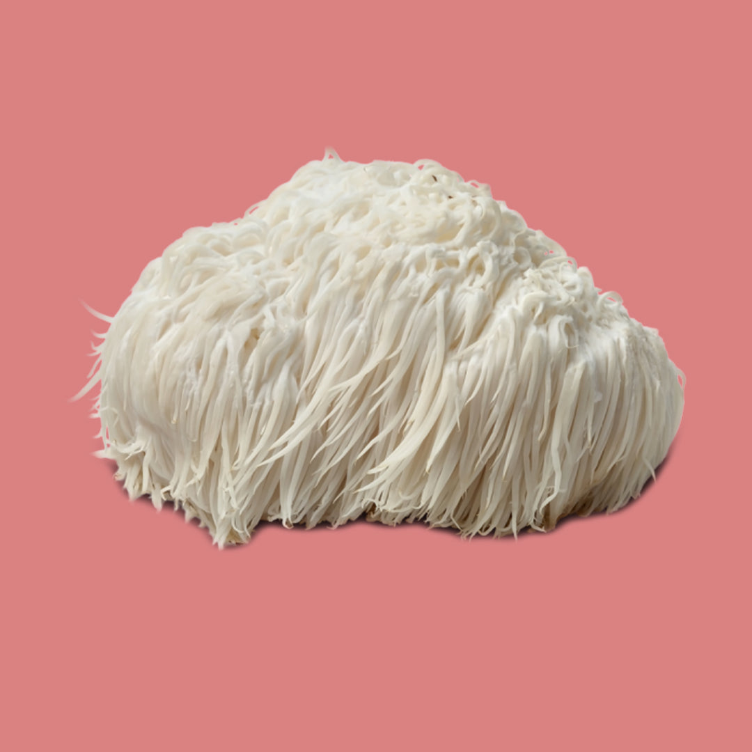 The Brain Benefits of Lion's Mane Mushroom