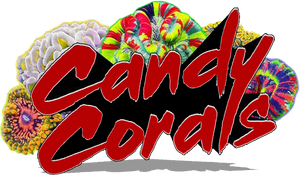 Candy Corals