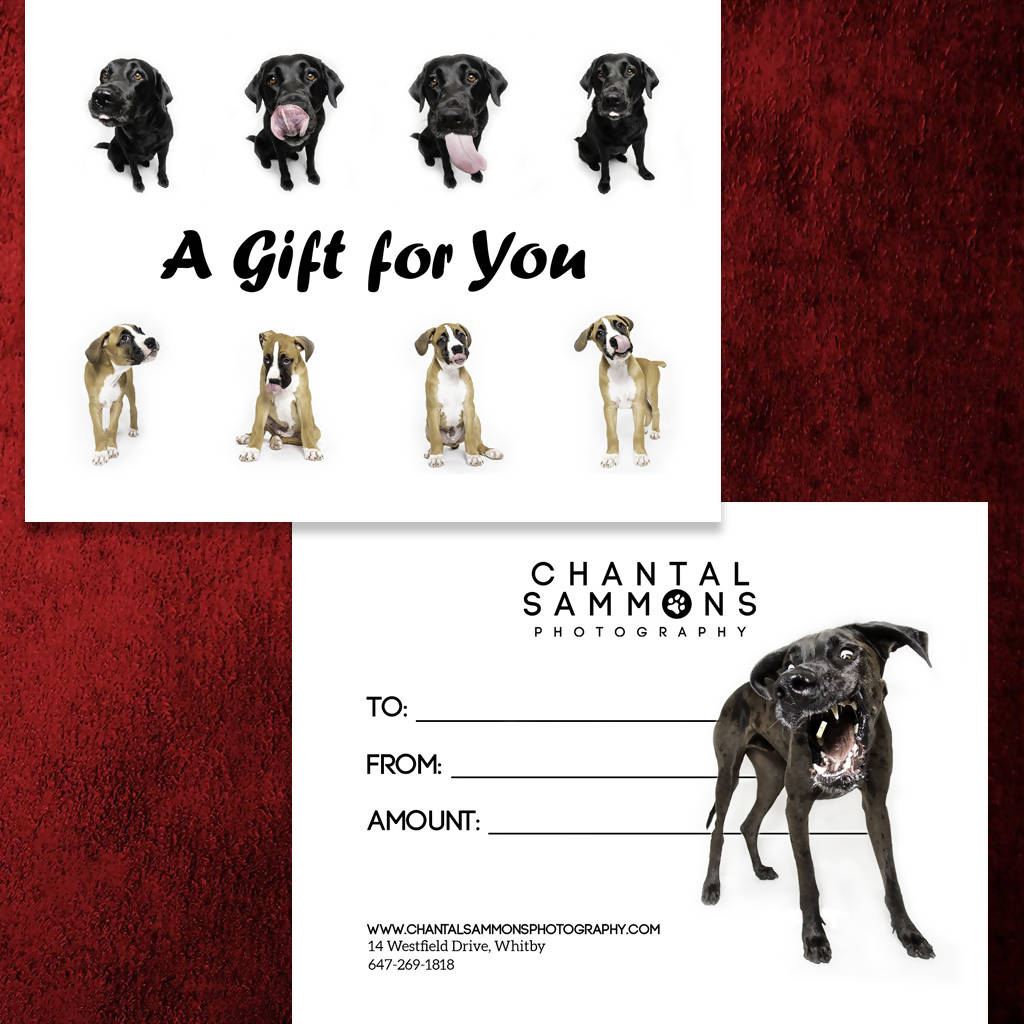 Pet Photography Gift Card