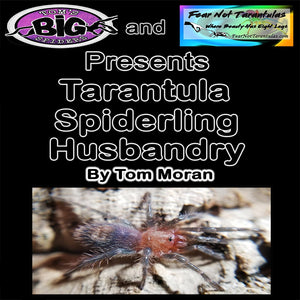 Tarantula Spiderling Husbandry - by Tom Moran of Tom's Big Spiders - Downloadable PDF *Available for ALL purchases