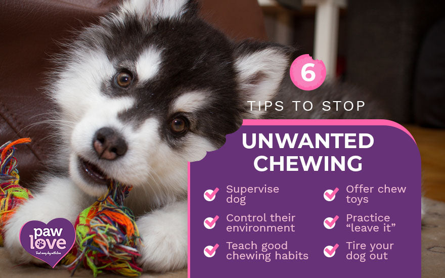 6 tips to stop unwanted chewing
