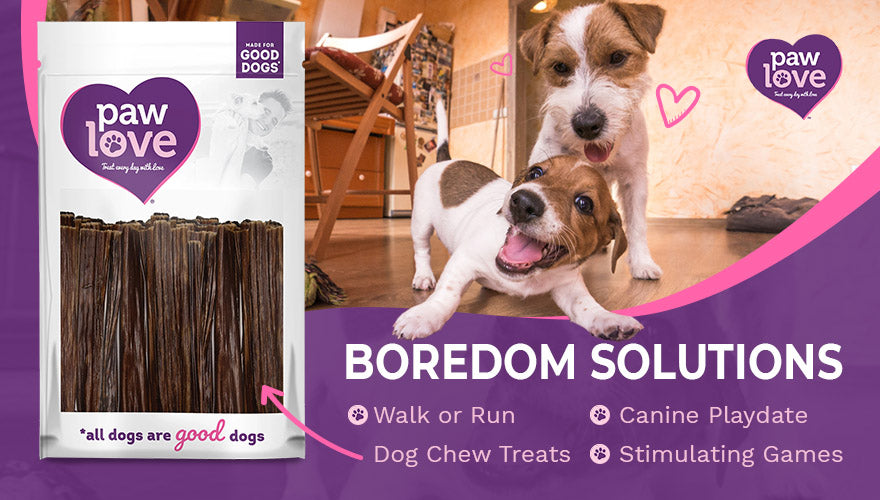 Canine Boredom Solutions