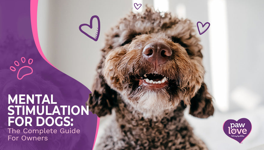 Mental Stimulation For Dogs The Complete Guide For Owners