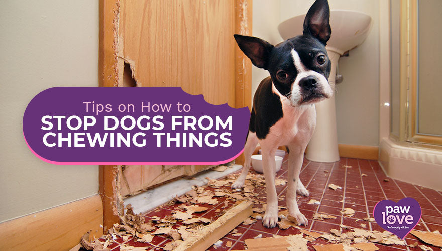 Tips on How to Stop Dogs from Chewing Things