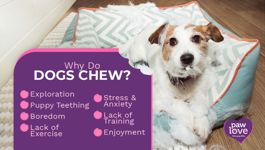 why do dogs chew