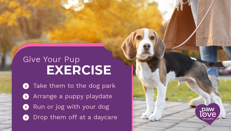 give your pup exercise