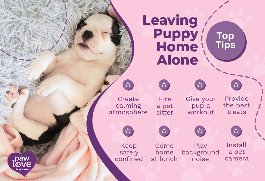 leaving pup at home top tips