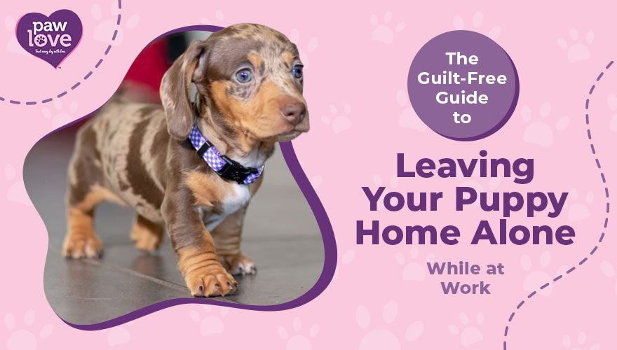 The Guilt-Free Guide to Leaving Your Puppy Home Alone While at Work