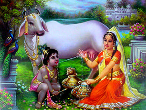 Krishna drinking cow's milk directly poster-reprint on paper-(20x16 inches)