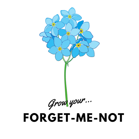 Grow Your Forget Me Not: Seeds