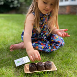 Grow Your Ladybird Flower: Kit