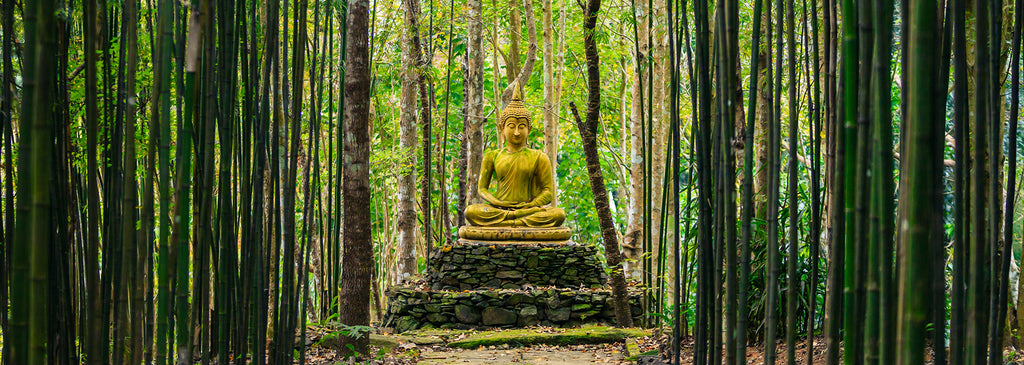 Buddha in forest