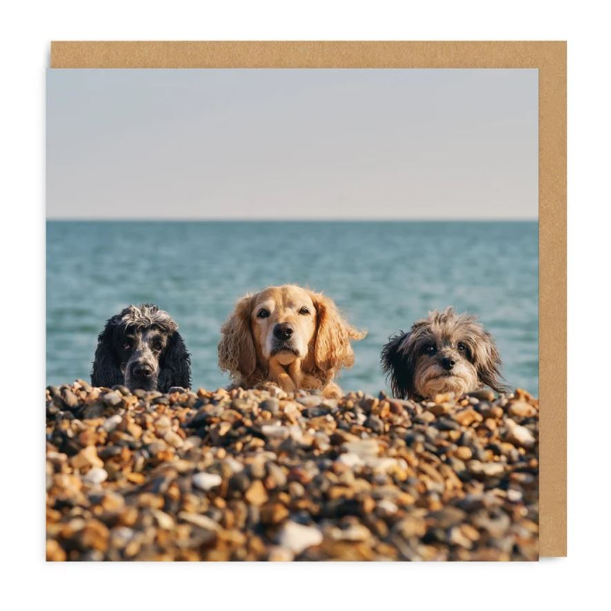 Three Beach Dogs Square Greetings Card