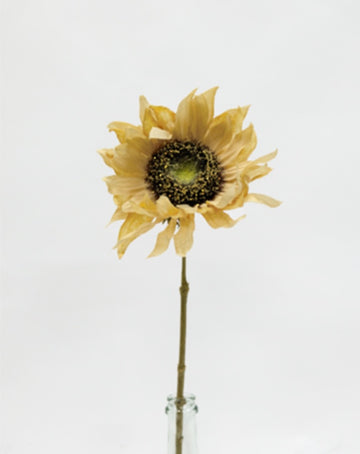 Dried Sunflower Yellow 61cm
