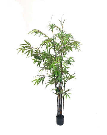 Japanese Bamboo Tree Potted 1.5m