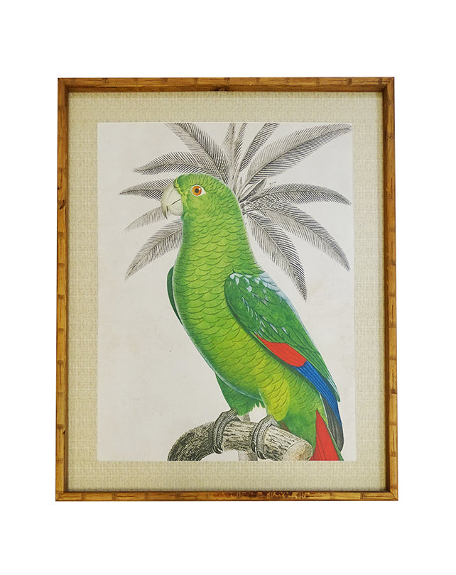 Parrot Wall Art  - XL  120cmH