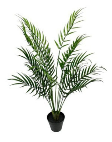 Potted Areca Palm 1.2m
