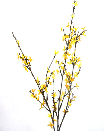 Forsythia Spray Yellow 1.2m
