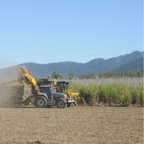 Tractor harvesting sugarcane used for compostable cling wrap cling film