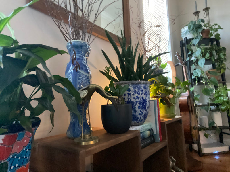 Houseplant Enthusiasts - Elizabeth Fierman
