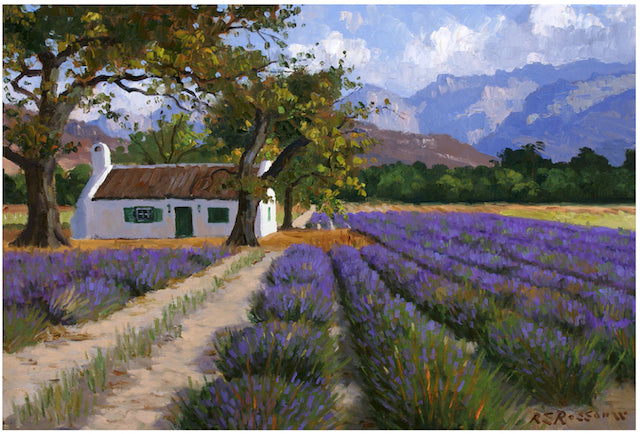 Print - Lavender in the Winelands