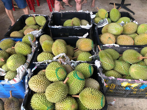 Raub Highland MSW (猫山王) - Durian Sorting Facility